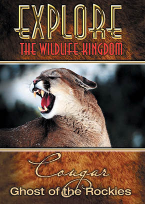 Explore the Wildlife Kingdom: Cougar, Ghost of the Rockies